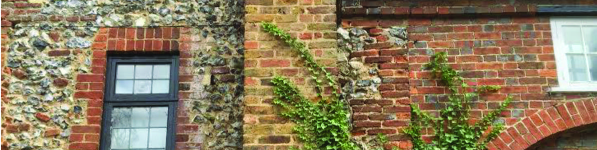 This ivy is poison to your building